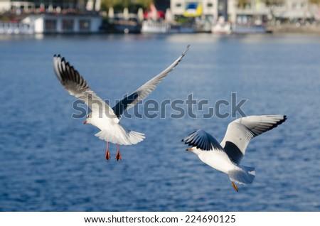 gulls prepare for landing (Hamburg, Germany) - stock photo