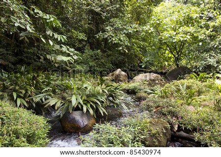 Gully in rainforest in the Choco Biological Region in North West Ecuador - stock photo
