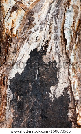 gum tree background - stock photo