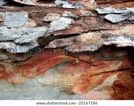 Gum Tree Bark Textures 1 - stock photo