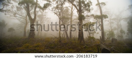 gum trees in the mist, Rocky Hills, Tasmania - stock photo