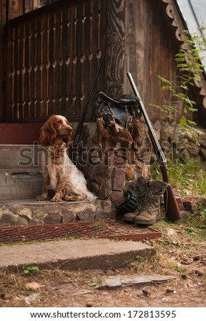 Gun dog near to shot-gun and trophies, vertical, outdoors - stock photo