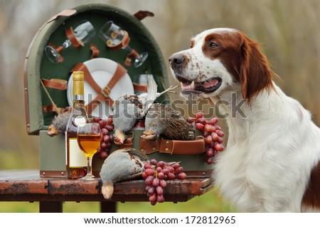 Gun dog near to trophies, horizontal, outdoors - stock photo