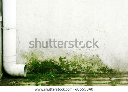 Gutter on wall with mold - stock photo