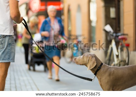 Guy in the city center with a dog on a leash. Urban scene. - stock photo