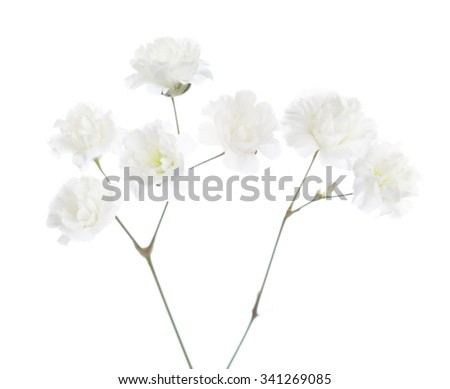 Gypsophila isolated on white background. Very shallow depth of field. Selective focus - stock photo