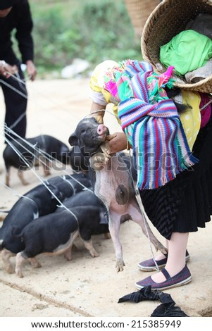 H'mong woman are choosing to buy a pig in Dongvan market, Vietnam - stock photo