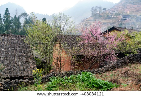 HA GIANG, VIETNAM, January 16, 2106 spring on, the simple houses, blooming peach flowers trees, rock plateau where Ha Giang, Vietnam northernmost country