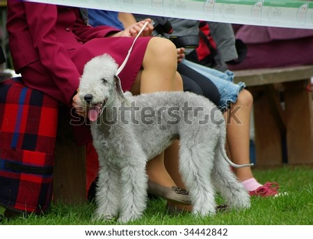 HAAPSALU, ESTONIA - JULY 25 : Haapsalu National Dog Show and competition on July 25, 2009 in Haapsalu, Estonia.