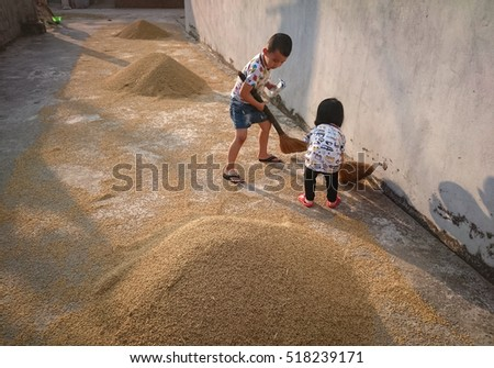 HAI DUONG, Vietnam, November 19, 2016 Children, rural Hai Duong, Vietnam, dried rice. Looking cute