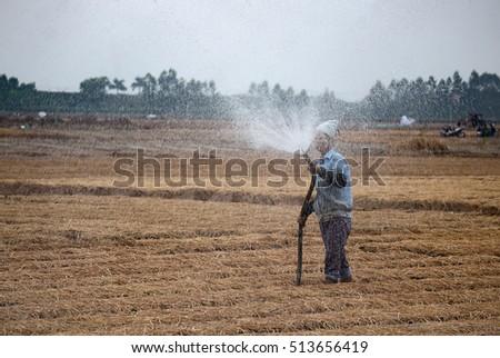 HAI DUONG, Vietnam, September 20, 2016 farmers, rural Hai Duong, planting carrots