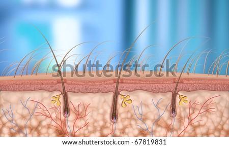 hair follicle - stock photo