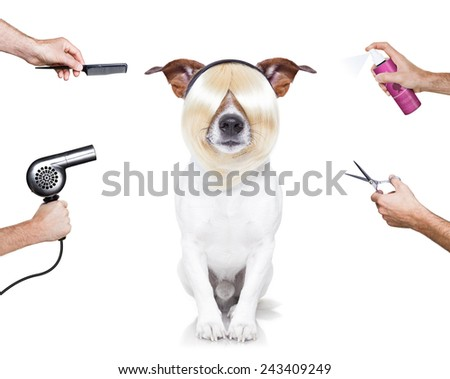 hairdresser dog ready to look beautiful at the wellness spa, isolated on white background - stock photo