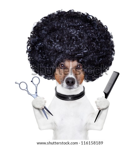 hairdresser  scissors comb dog - stock photo