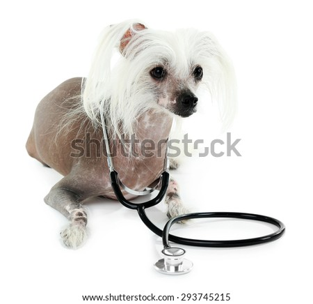 Hairless Chinese crested dog with stethoscope isolated on white - stock photo