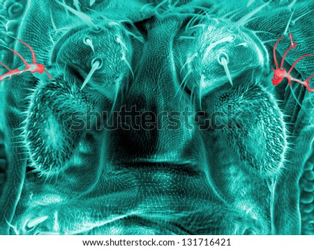Hairs and glands of a fruit fly, Drosophila melanogaster, scanning electron microscopy - stock photo