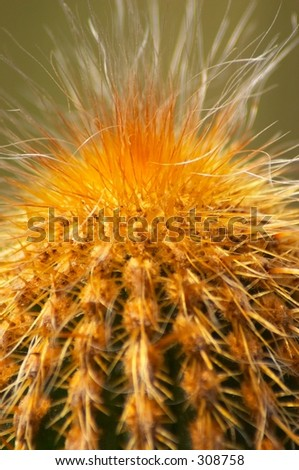 Hairs on a cactus
