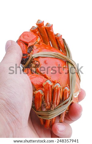 Hairy crabs in the hands isolated on white background - stock photo