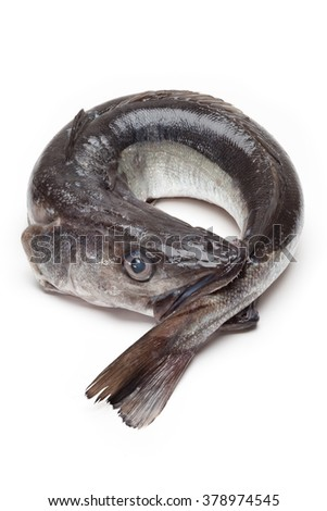 Hake coiled, catch-bites - stock photo
