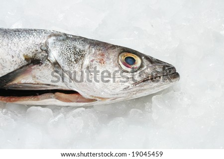 Hake fishes head on ice
