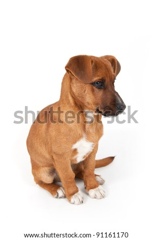Half-breed dog isolated on a white background. - stock photo