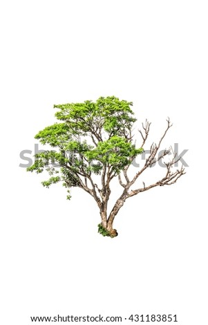 half dead tree isolated on white background