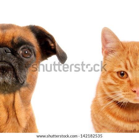 Half Dog and cat front portraits on white isolated background  - stock photo
