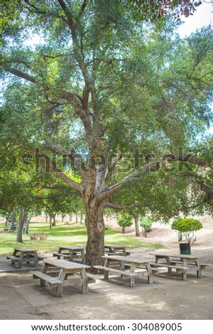 Half dozen picnic tables rest under the shade of a large oak tree in Val Verde, California.