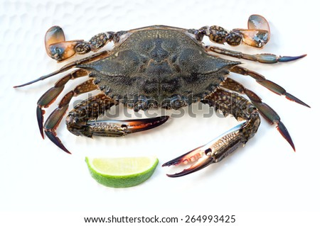 Half element of raw blue crab before cooking, lying on a white plate. Over white background, main focus on a claw, top view - stock photo