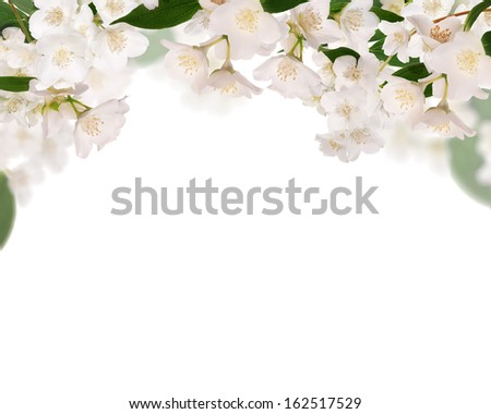 half frame from pure jasmine flowers isolated on white background - stock photo