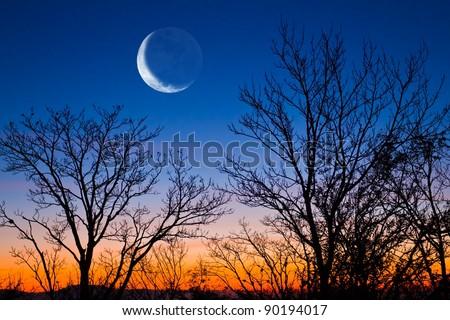 half moon on a evening sky - stock photo