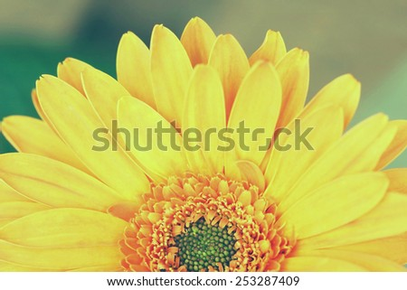 half of orange gerbera daisy flower, vintage style picture processing. - stock photo