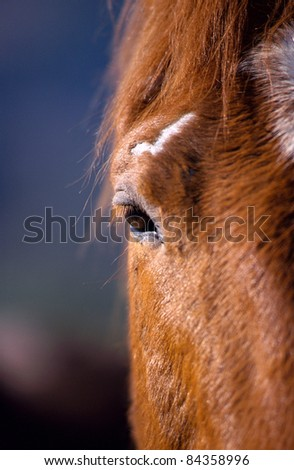 Half of the head of a brown horse, with eye and white spot