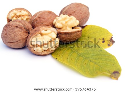 Half open and closed walnuts lying on the walnuts' leaves - isolated on white