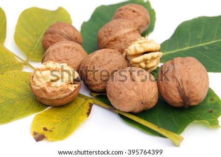 Half open and closed walnuts lying on the walnuts' leaves - isolated on white                - stock photo