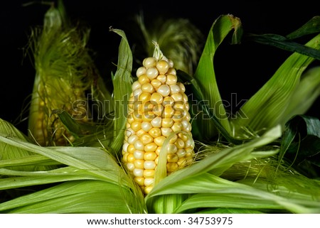 half shucked corn on the cob - stock photo