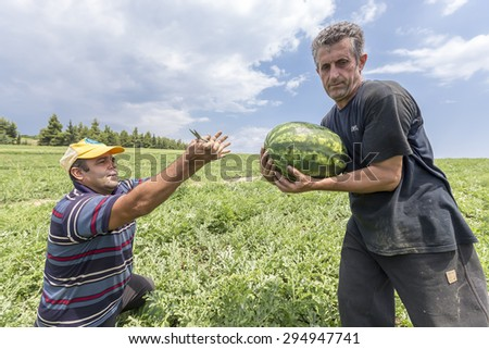 HALKIDIKI , GREECE, JULY 9, 2015: Farmers harvesting watermelons from the field - stock photo