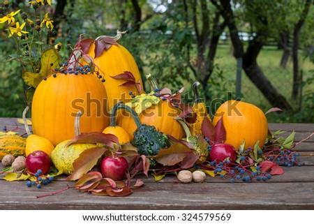 halloween, autumn colored pumpkins decoration - stock photo