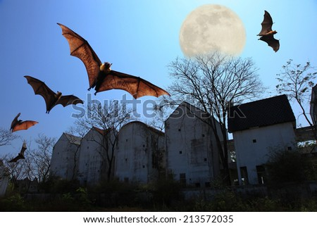 Halloween background. Bats flying in the night with a full moon and Copy space photo isolated. - stock photo