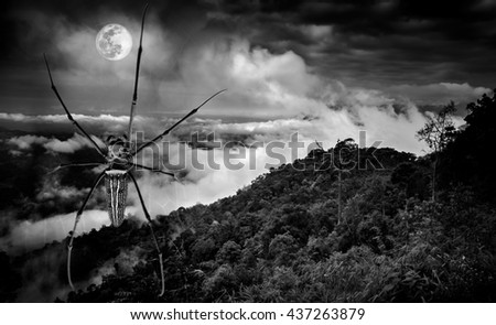 Halloween background. Closeup spider and fresh nature against beautiful sky and full moon at nighttime. Black and white tone. The moon taken with my own camera, no NASA images used. - stock photo