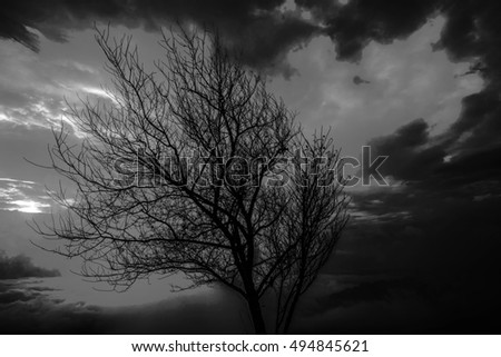 Halloween background.Dead tree branches in the park.