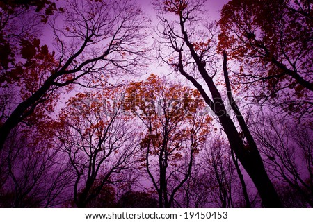 Halloween background. Mysterious dead forest. Purple color. - stock photo