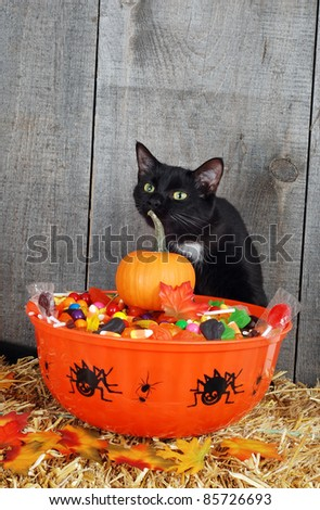 halloween candy and black cat - stock photo