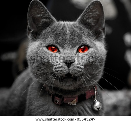 Halloween cat - stock photo