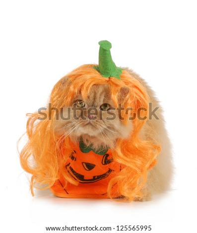 halloween cat dressed up like a pumpkin isolated on white background - stock photo