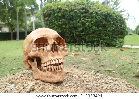 Halloween concept, zombie skull rising out from the ground  - stock photo