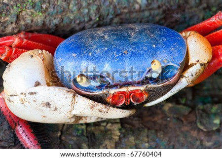 Halloween Crab Stock Images, Royalty-Free Images & Vectors ...