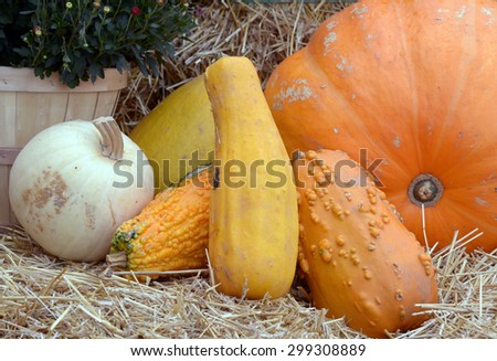 Halloween decoration in the front door with various size and shape squash and pumpkin - stock photo