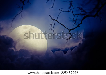Halloween design background with , naked trees, and bats and moon