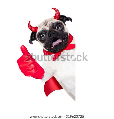 halloween devil pug dog  hiding behind white empty blank  banner or placard ,thumb up ,isolated on white background - stock photo